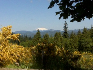 A view of Mt. St. Helens from the hilltop above Rainier, OR